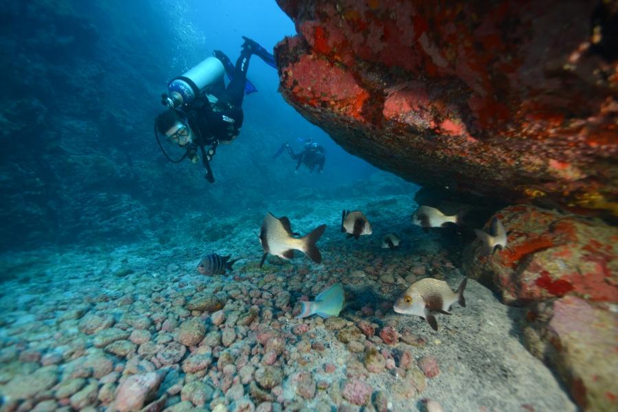 scuba diving both