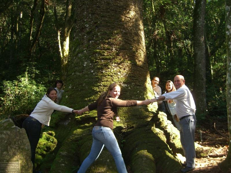 pinheiro multisecular